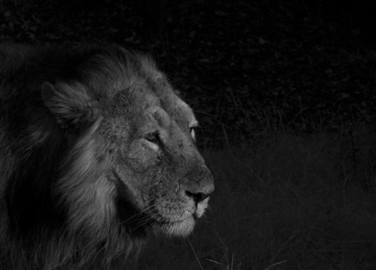 Birding & Lion Photography @ Gir